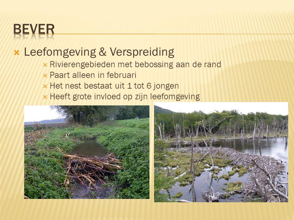  Leefomgeving & Verspreiding  Rivierengebieden met bebossing aan de rand  Paart alleen in februari  Het nest bestaat uit 1 tot 6 jongen  Heeft gr