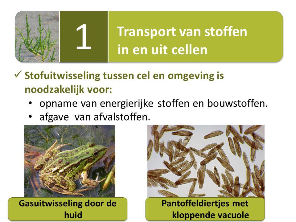 Transport van stoffen in en uit cellen Transport van stoffen in en uit cellen 1 1 Stofuitwisseling tussen cel en omgeving is noodzakelijk voor: opname van energierijke stoffen en bouwstoffen.