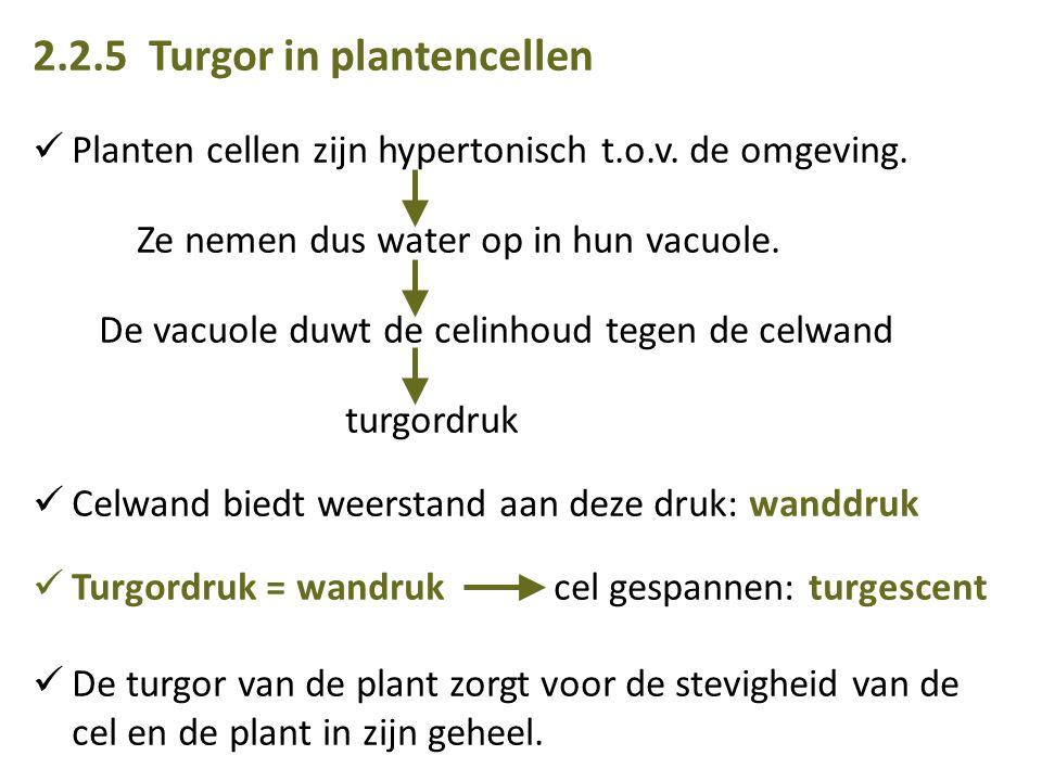 2.2.5 Turgor in plantencellen Planten cellen zijn hypertonisch t.o.v.