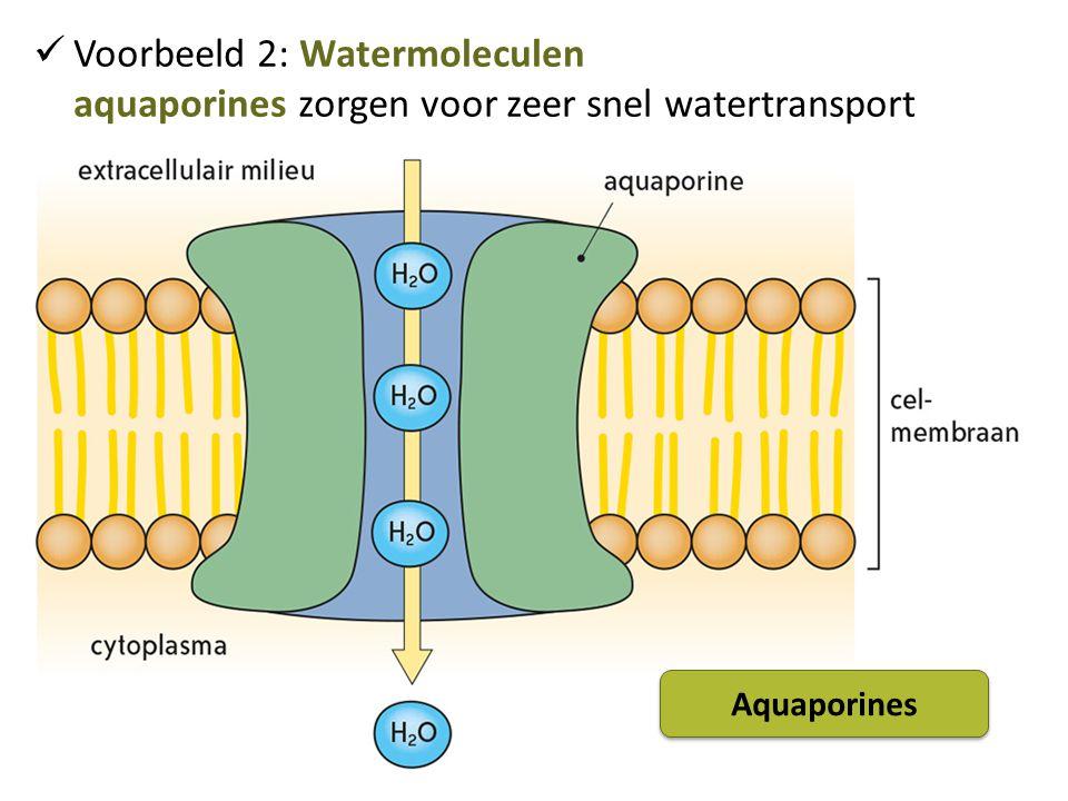Voorbeeld 2: Watermoleculen aquaporines zorgen voor zeer snel watertransport Aquaporines