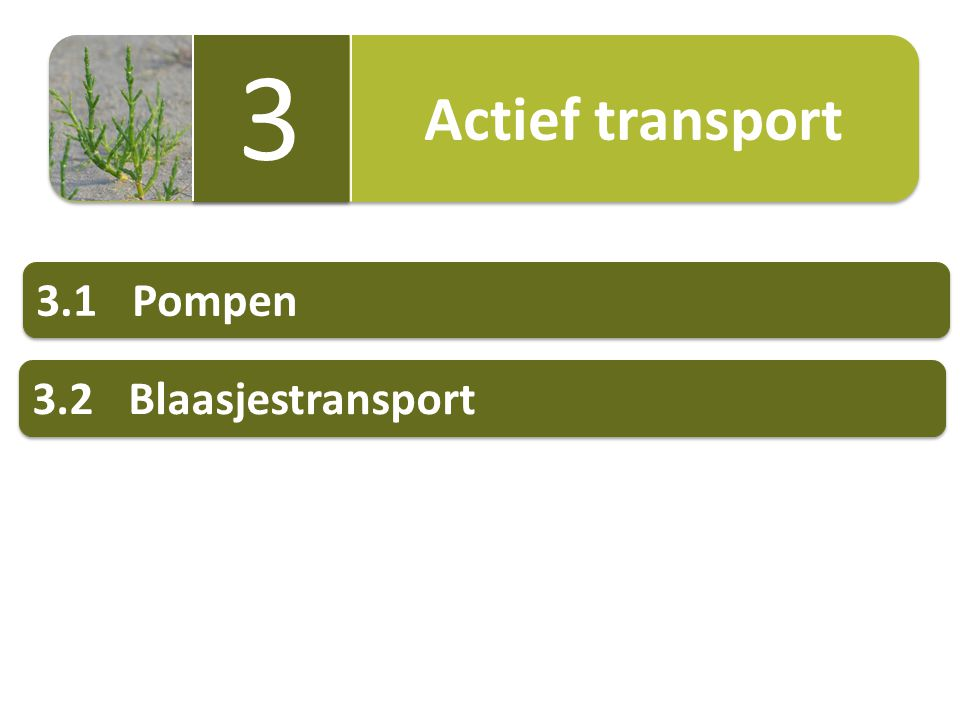 Actief transport 3 3 3.1Pompen 3.2Blaasjestransport