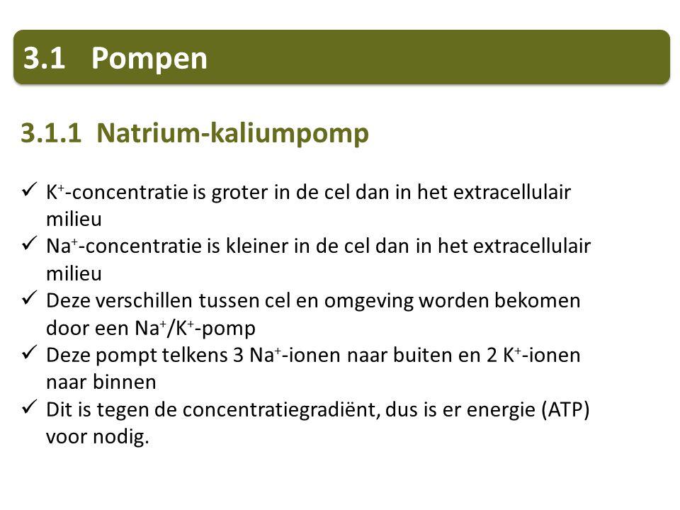 3.1Pompen 3.1.1 Natrium-kaliumpomp K + -concentratie is groter in de cel dan in het extracellulair milieu Na + -concentratie is kleiner in de cel dan in het extracellulair milieu Deze verschillen tussen cel en omgeving worden bekomen door een Na + /K + -pomp Deze pompt telkens 3 Na + -ionen naar buiten en 2 K + -ionen naar binnen Dit is tegen de concentratiegradiënt, dus is er energie (ATP) voor nodig.
