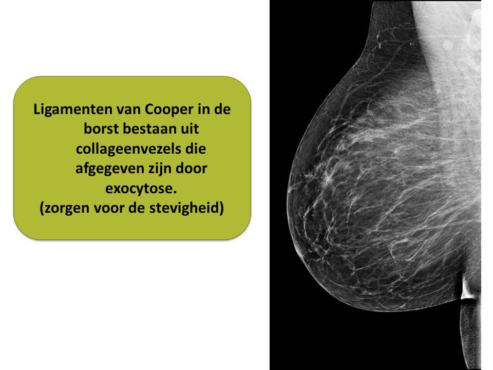 Ligamenten van Cooper in de borst bestaan uit collageenvezels die afgegeven zijn door exocytose.