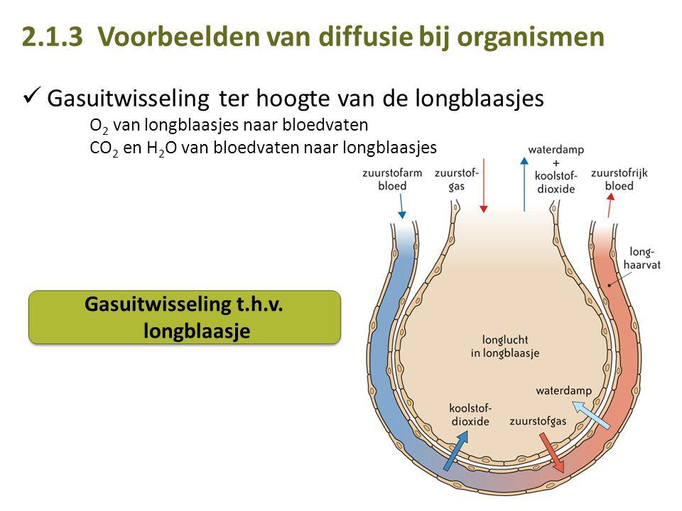 2.1.3 Voorbeelden van diffusie bij organismen Gasuitwisseling ter hoogte van de longblaasjes O 2 van longblaasjes naar bloedvaten CO 2 en H 2 O van bloedvaten naar longblaasjes Gasuitwisseling t.h.v.