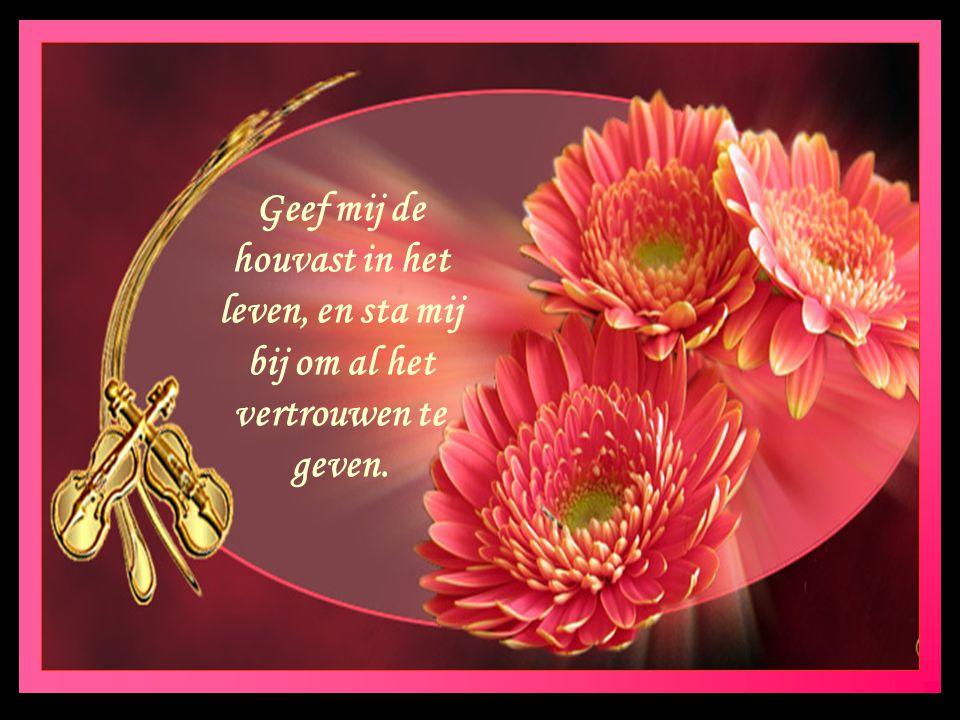 Vriendschap is iets wat langzaam groeit, en alle dagen mooier bloeit.
