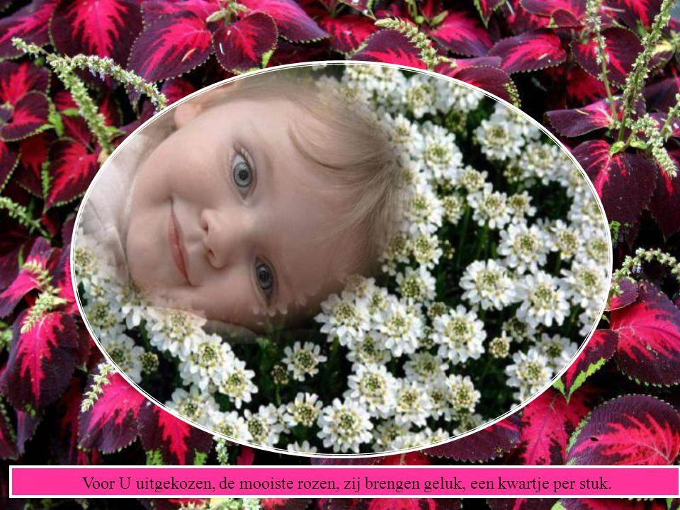 Dat kijkt naar haar bloemen, hun kleuren als douw.