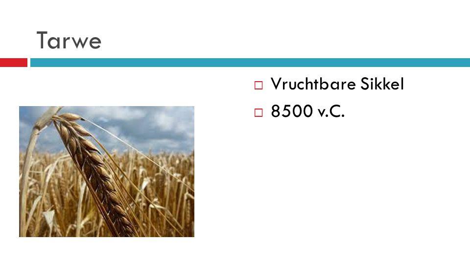 Tarwe  Vruchtbare Sikkel  8500 v.C.