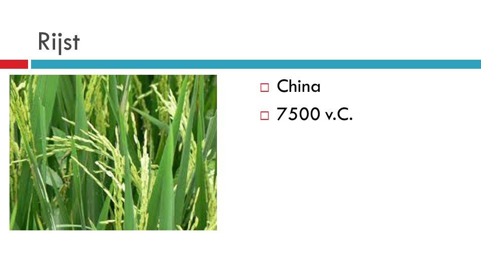 Rijst  China  7500 v.C.