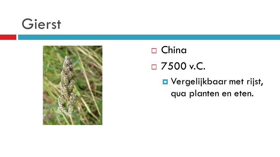 Gierst  China  7500 v.C.  Vergelijkbaar met rijst, qua planten en eten.