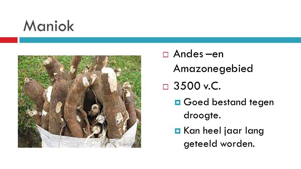 Maniok  Andes –en Amazonegebied  3500 v.C.  Goed bestand tegen droogte.  Kan heel jaar lang geteeld worden.