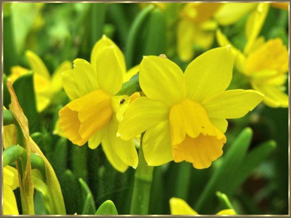 Die lieve kleine kuikentjes, al met hun zachte veertjes, ze piepen en gaan flink te keer, de lente komt het goede weer.