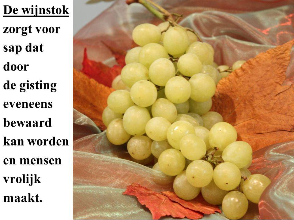 De vijg met zijn vele pitjes zorgt voor zoete vruchten die in de zon gedroogd kunnen worden en bewaard als voedsel.