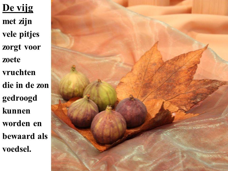 Telkens opnieuw worden we uitgenodigd vrucht te dragen, om ons leven zo in te richten dat de aarde als Gods schepping er beter van wordt.