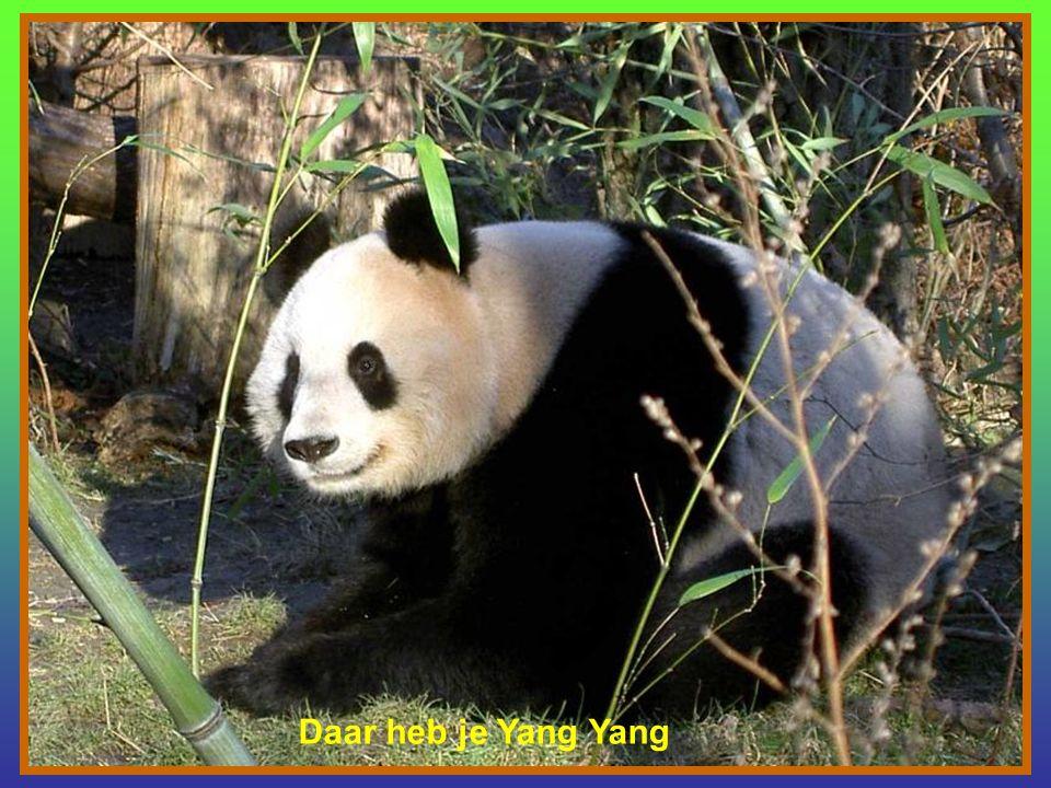 Powerpoint: gemaakt door Tilly PANDA Yang Yang en Long Hui met Baby I'm in the mood for Love