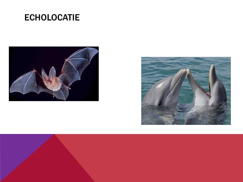 WAT valt er op? Welke andere voorbeeld kennen jullie hiervan? Wat hebben deze dieren als voordeel?
