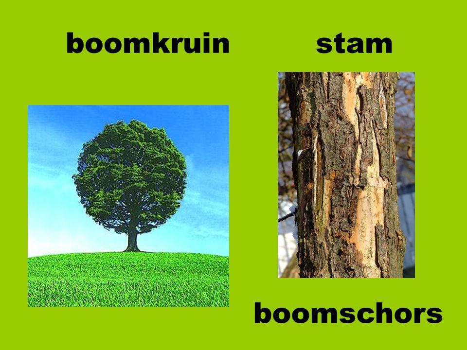 boomkruin stam boomschors