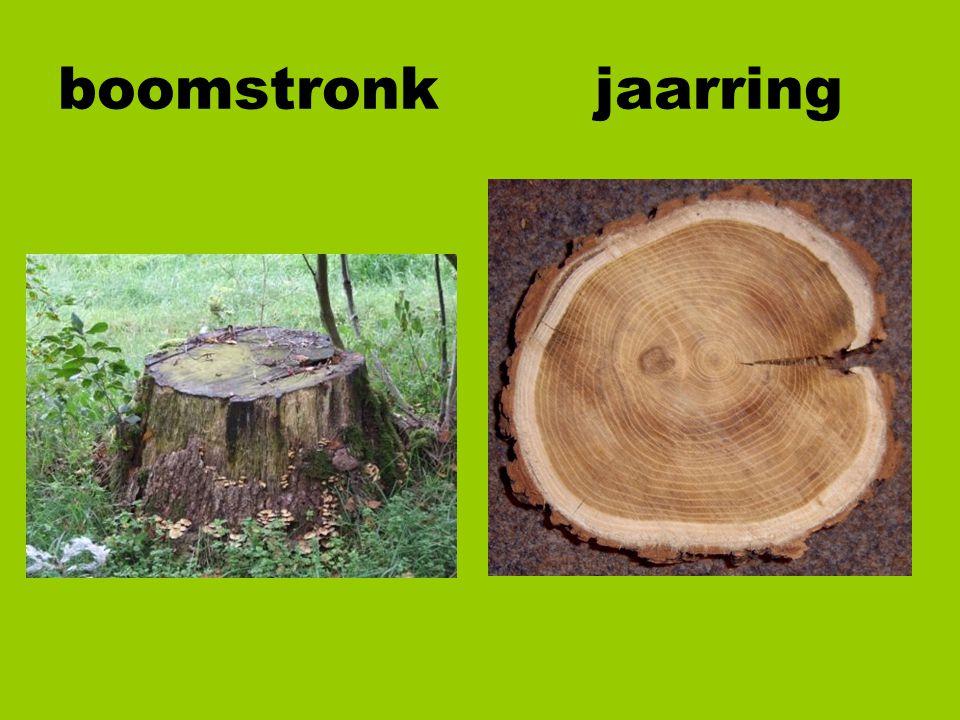 boomstronk jaarring
