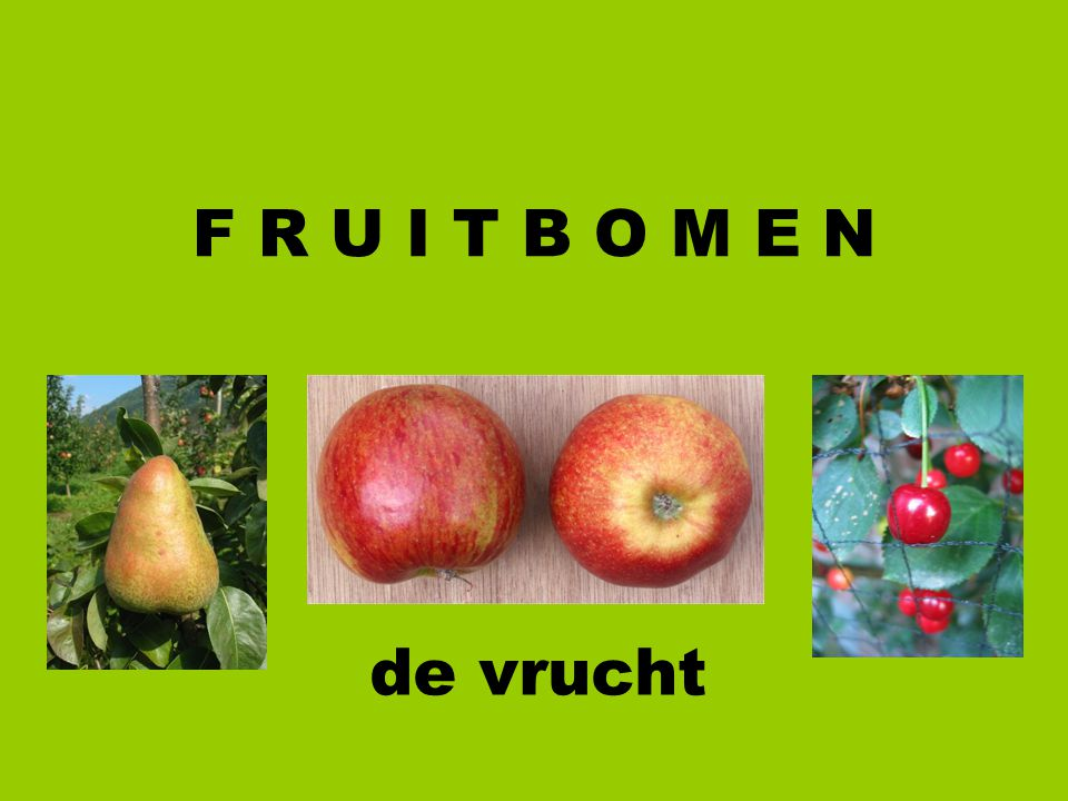 F R U I T B O M E N de vrucht