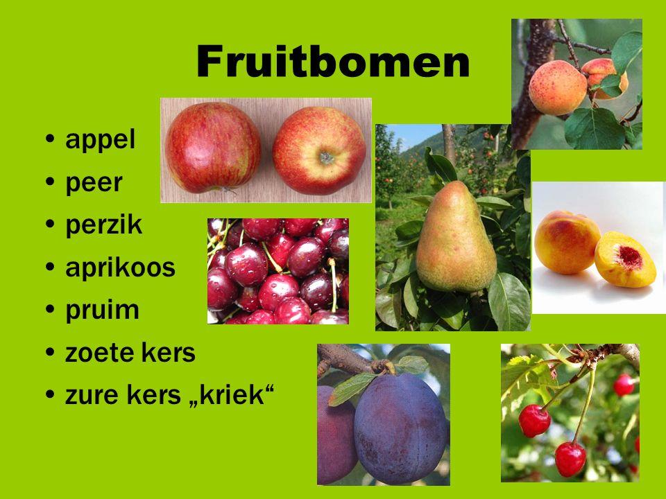 """Fruitbomen appel peer perzik aprikoos pruim zoete kers zure kers """"kriek"""""""