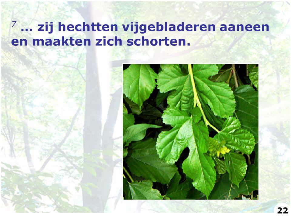 7 … zij hechtten vijgebladeren aaneen en maakten zich schorten. 22