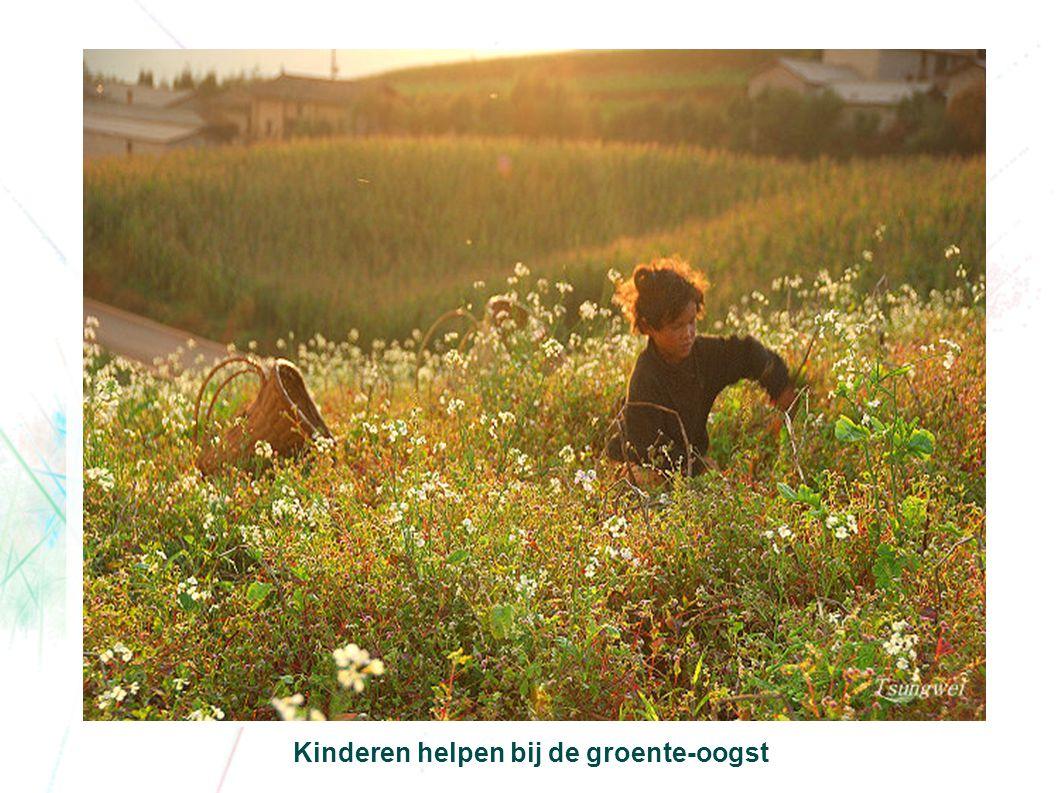 Kinderen helpen bij de groente-oogst