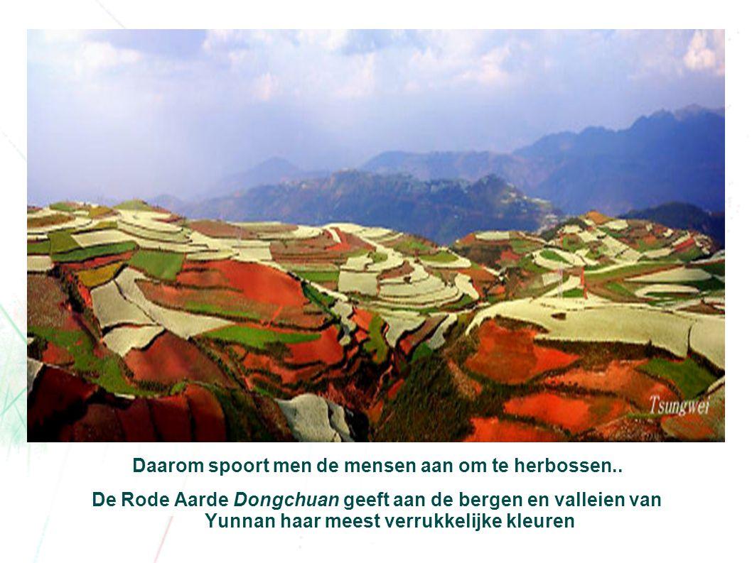 De rode aarde accentueert nog meer de gebogen lijnen van de akkerbouw.