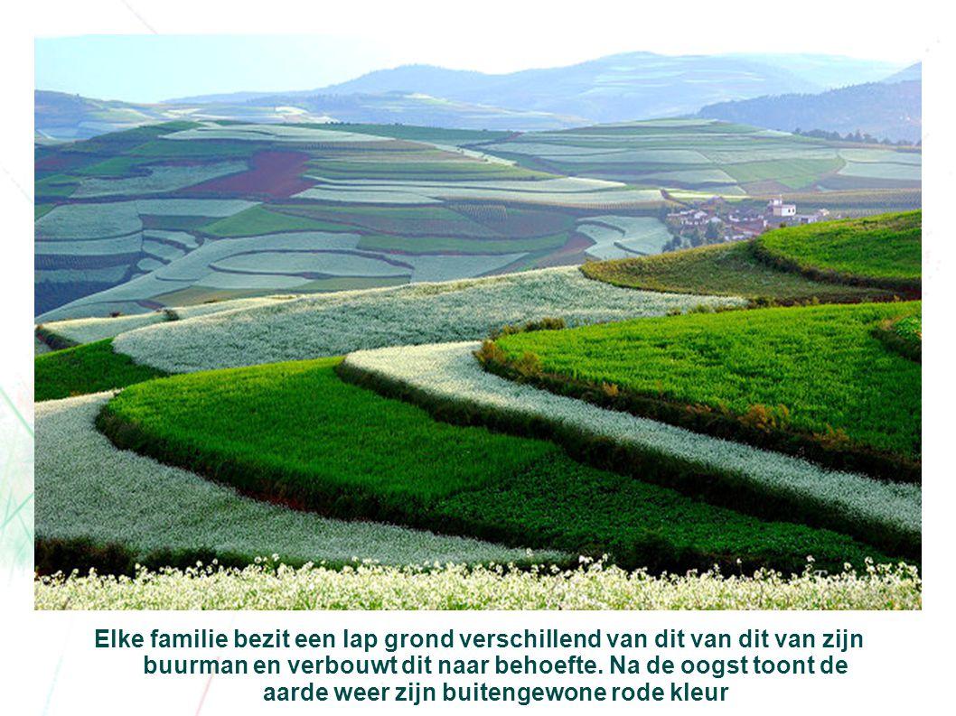 Elke familie bezit een lap grond verschillend van dit van dit van zijn buurman en verbouwt dit naar behoefte.