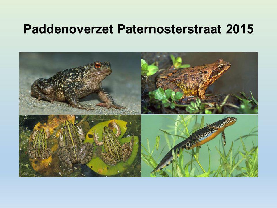 Paddenoverzet Paternosterstraat 2015