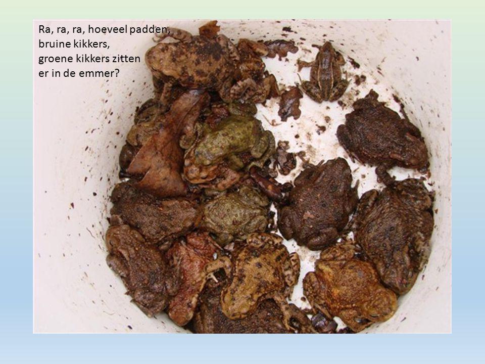 Afgezette eitjes van de pad (in slierten)
