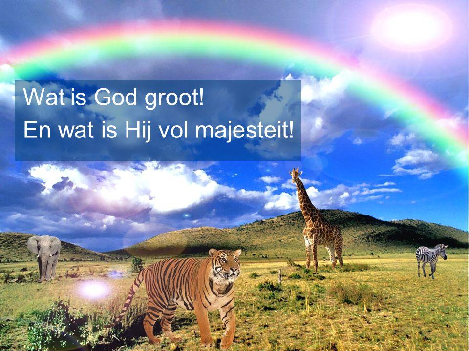 Wat is God groot! En wat is Hij vol majesteit!