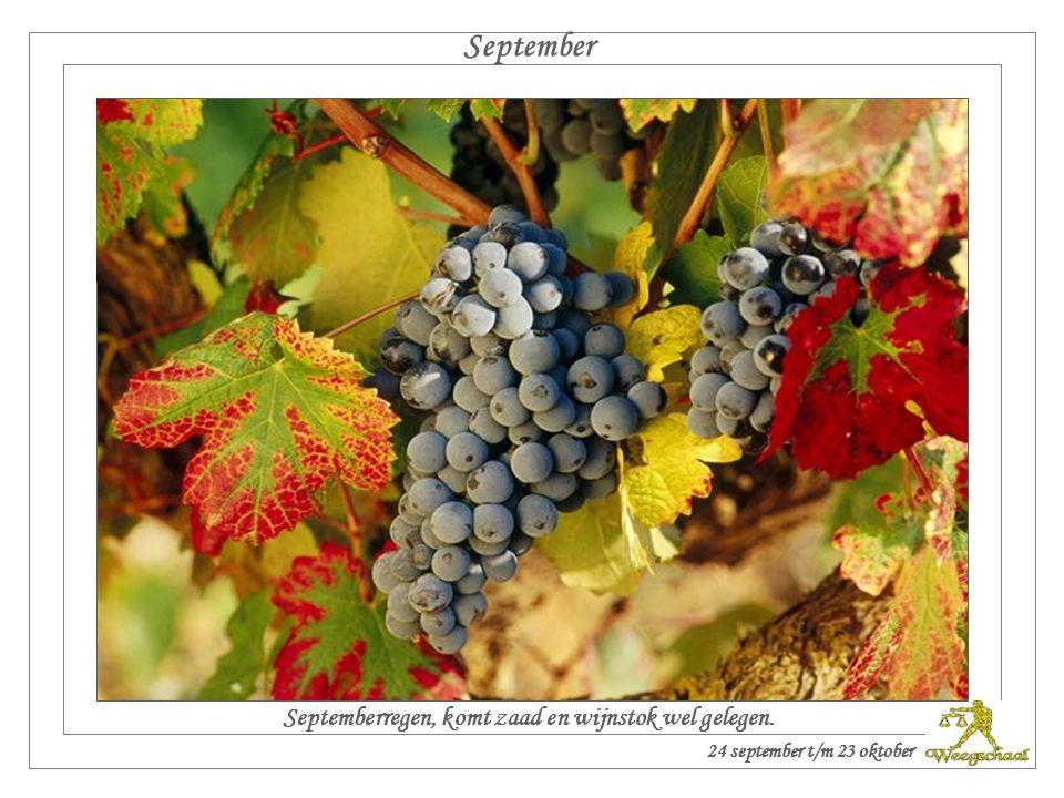 Augustus Geeft augustus niet veel regen, maar wel veel zonneschijn, dan krijgen we zeker goede wijn. 24 augustus t/m 23 september