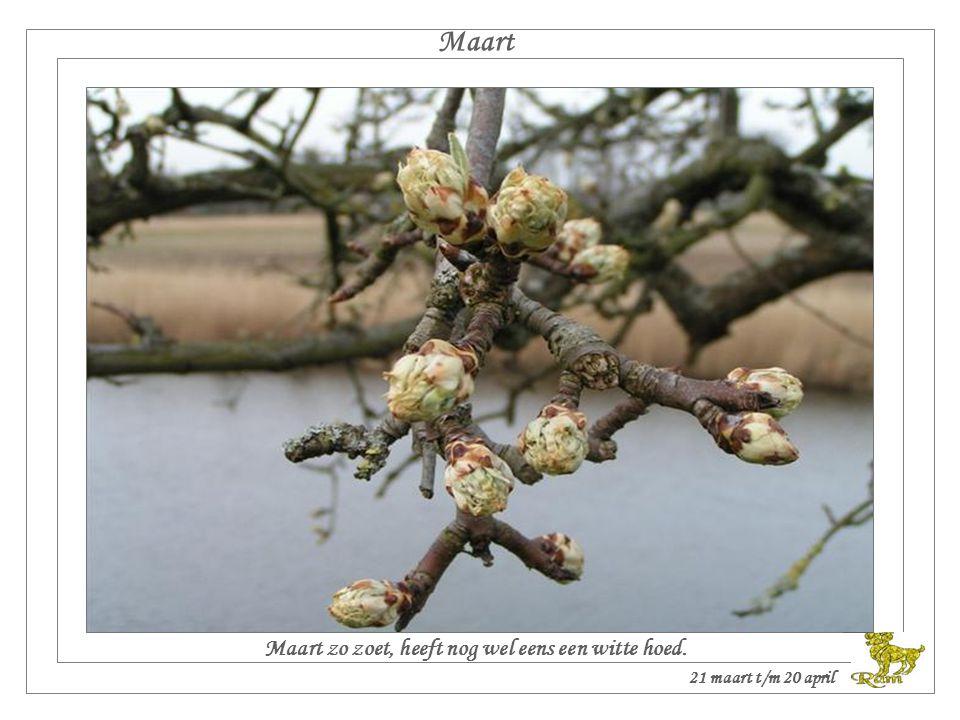 Maart Maart zo zoet, heeft nog wel eens een witte hoed. 21 maart t/m 20 april