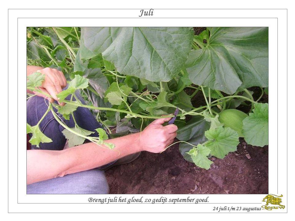 Juni Met veel donder, brengt de oogst ten onder. 22 juni t/m 23 juli