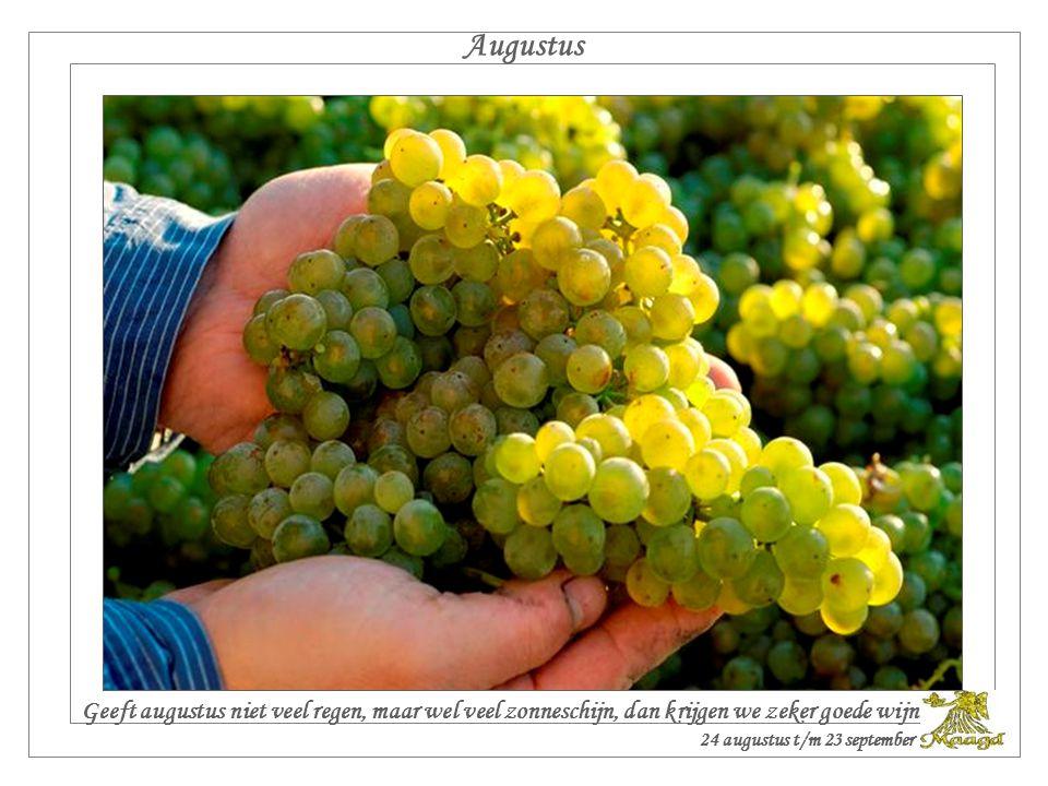 Augustus Geeft augustus niet veel regen, maar wel veel zonneschijn, dan krijgen we zeker goede wijn.