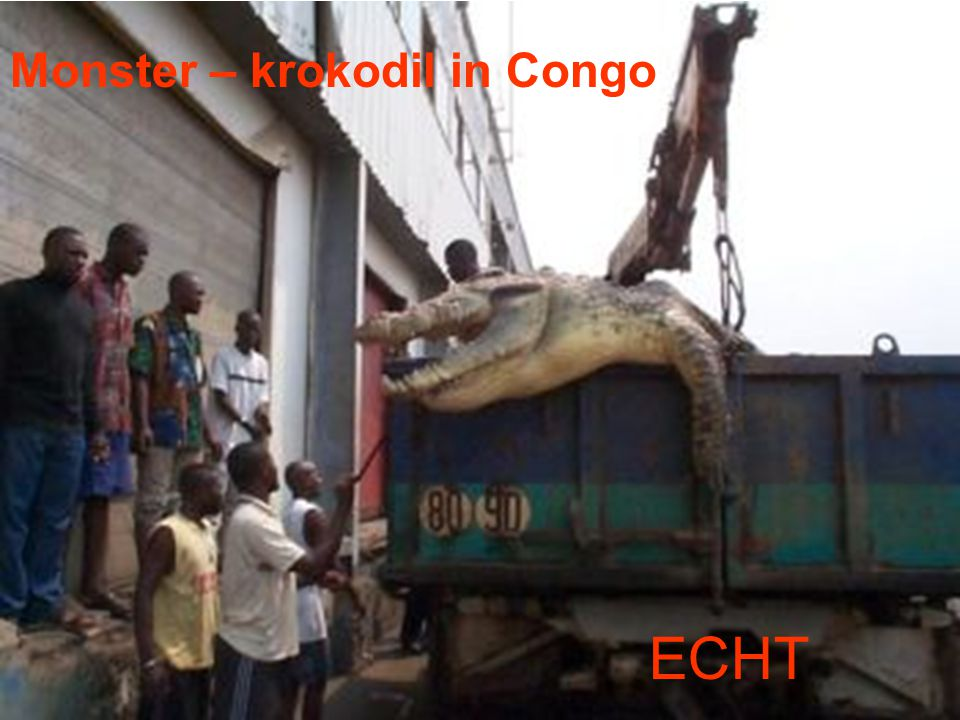 Monster – krokodil in Congo ECHT