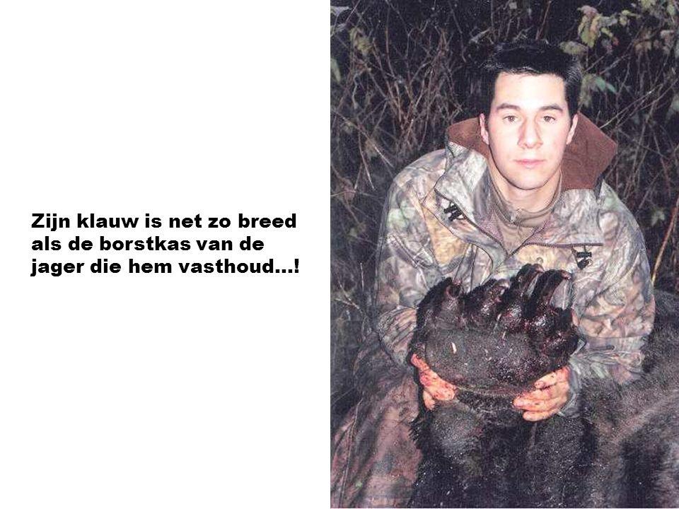 Dit was de laatste toerist die de beer aan het verorberen was. Een aangrijpend beeld!