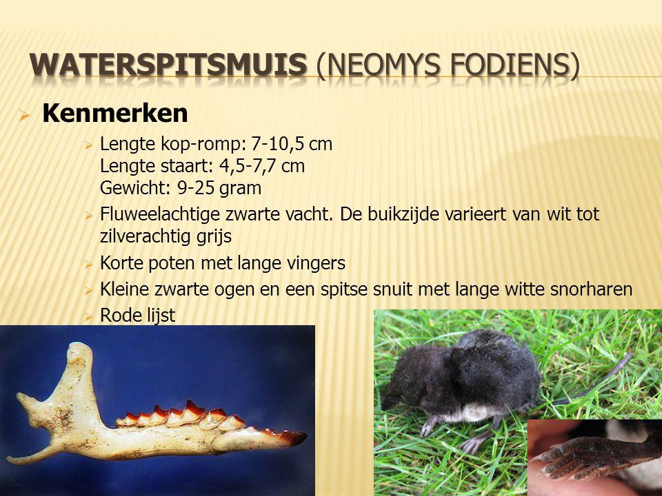 25 februari 2014 – Bram Romein Waterspitsmuis, Veldmuis & Rosse Vleermuis