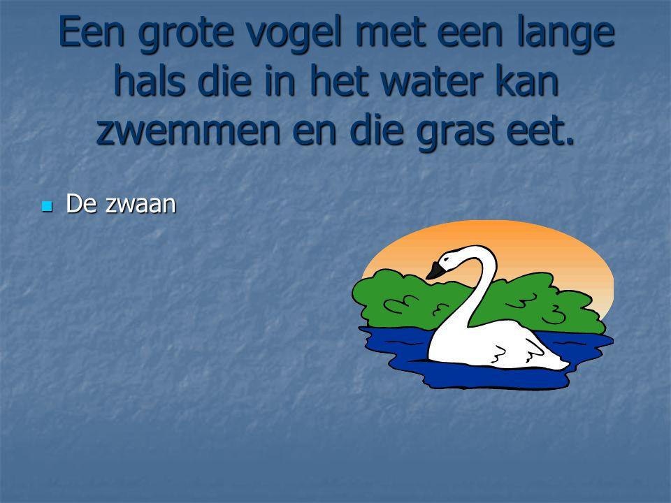 Een grote vogel met een lange hals die in het water kan zwemmen en die gras eet. De zwaan De zwaan