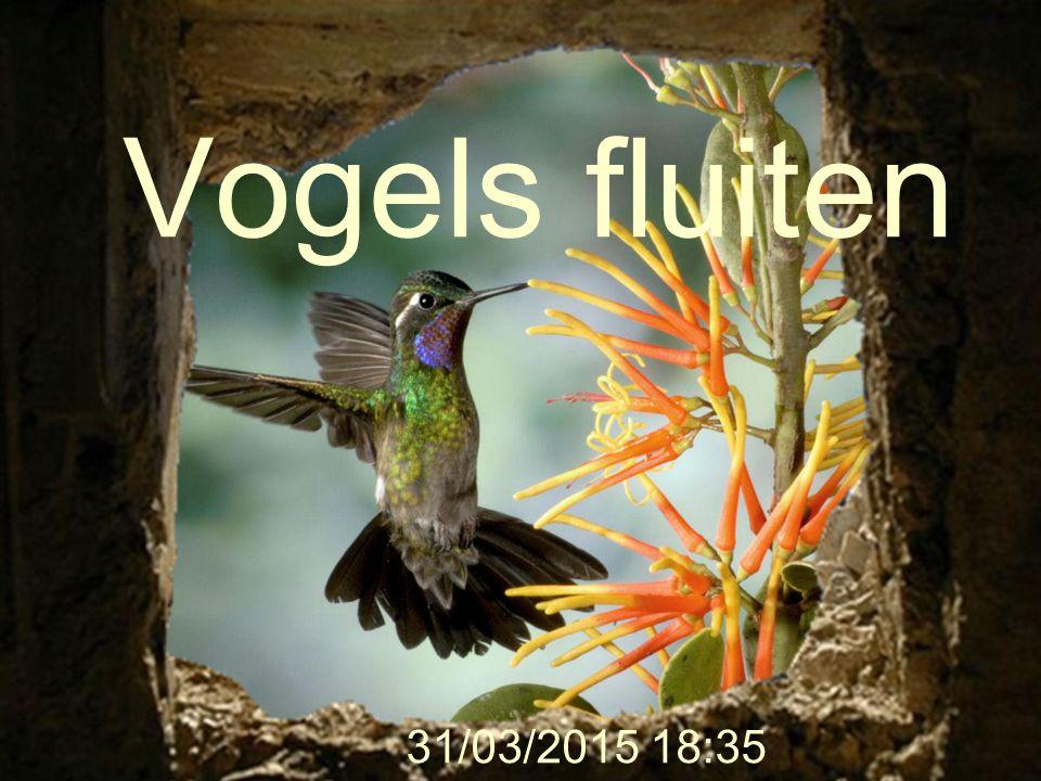 Vogels fluiten 31/03/2015 18:37