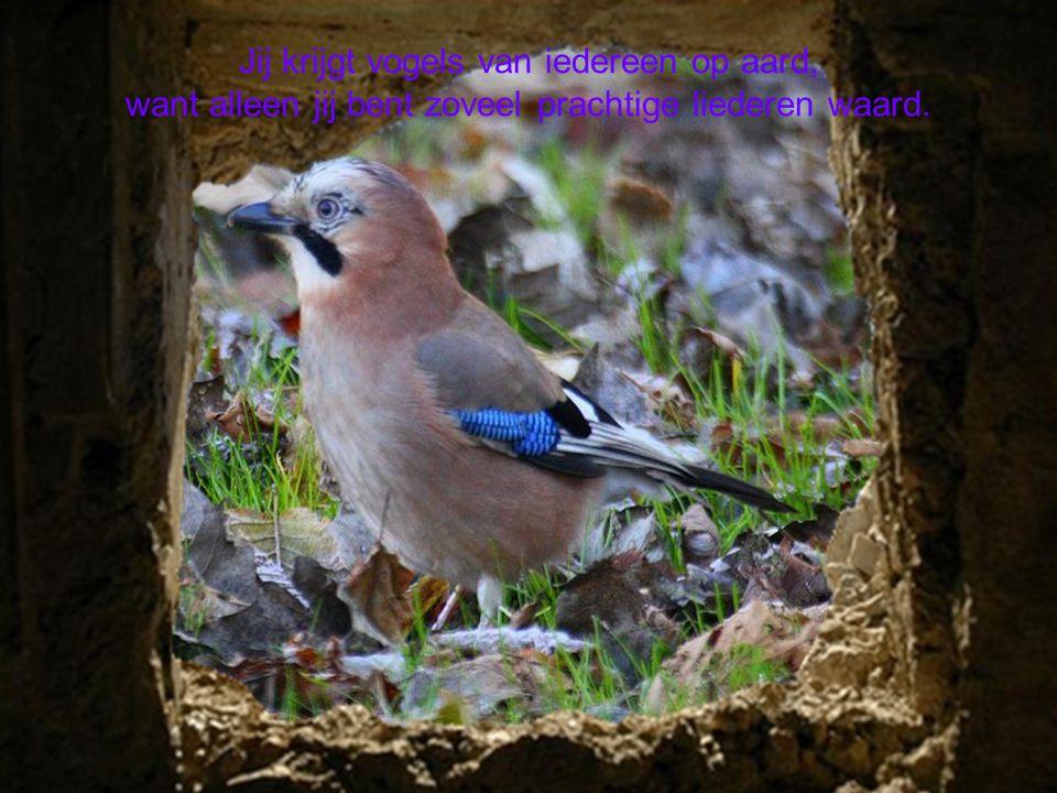 De vogels die komen van één persoon die veel om je geeft, die er altijd is geweest en die met je heeft geleefd.