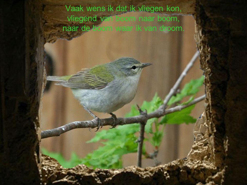 Jij krijgt vogels van iedereen op aard, want alleen jij bent zoveel prachtige liederen waard.