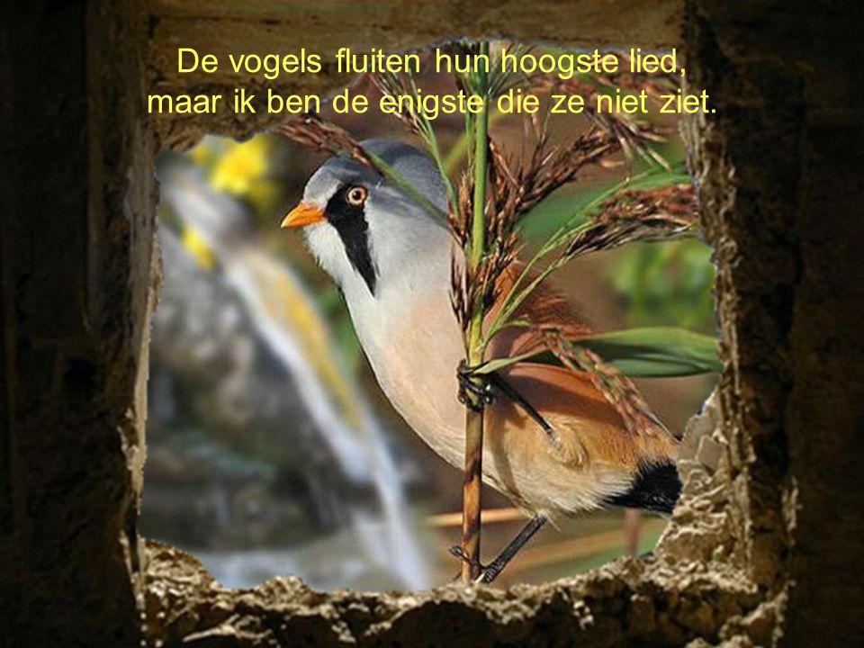 De vogels fluiten hun hoogste lied, maar ik ben de enigste die ze niet ziet.