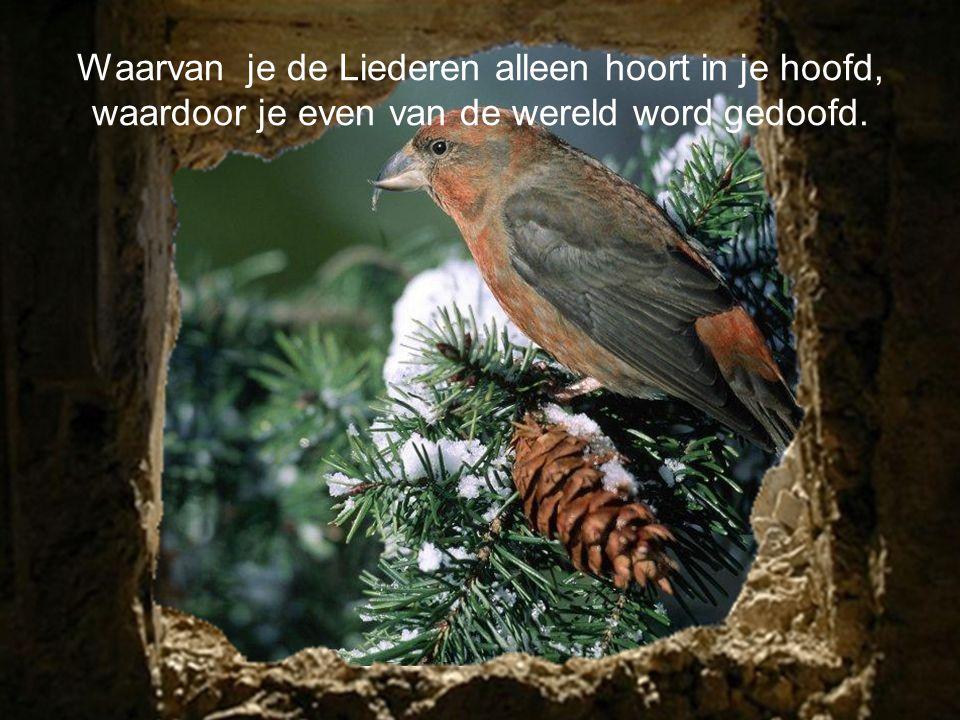 Geloof ik er niet in of is het schijn,en zijn het vogels die er in de werkelijkheid niet zijn.