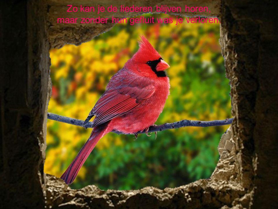 De vogels strijken neer op je hart, waar jij als persoon zo naar hebt gesmart.
