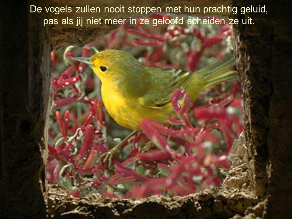 De vogels zullen nooit stoppen met hun prachtig geluid, pas als jij niet meer in ze geloofd scheiden ze uit.