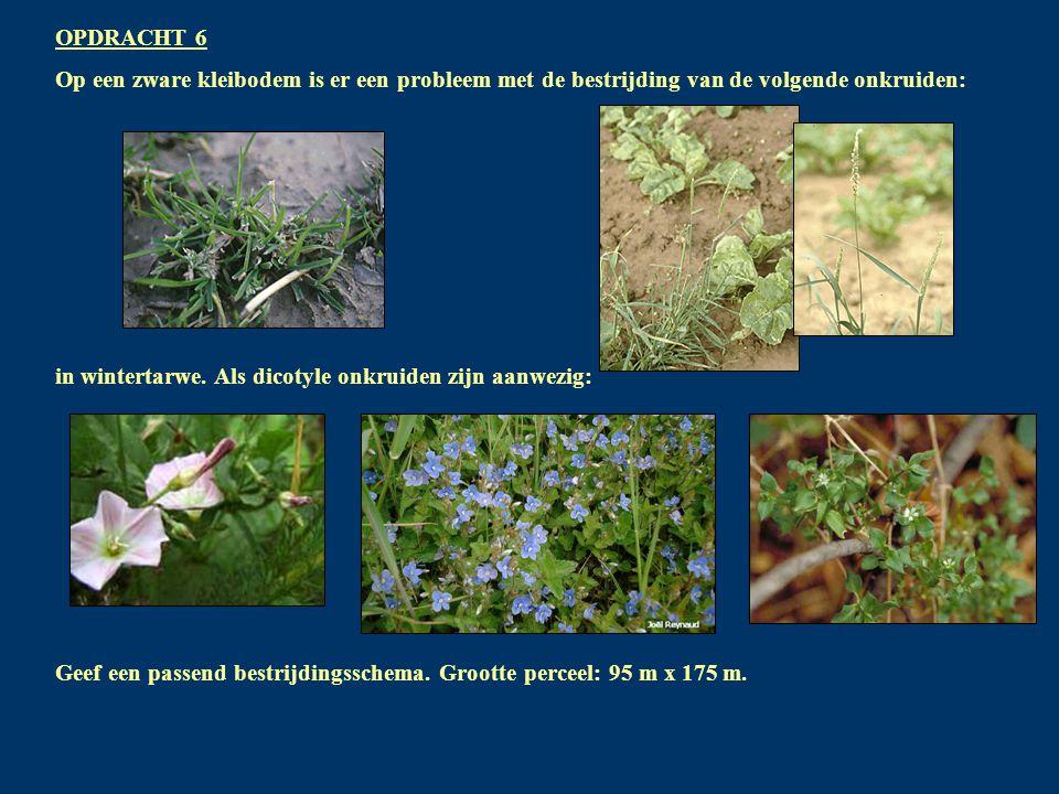 OPDRACHT 6 Op een zware kleibodem is er een probleem met de bestrijding van de volgende onkruiden: in wintertarwe.