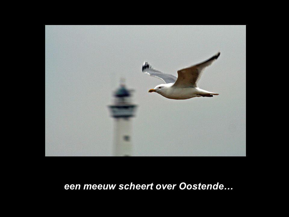 """DE """"TORRE VAN OOSTENDE"""" STELT VOOR : EEN MEEUWENVLUCHT BOVEN OOSTENDE. PPS-TVO-21.01.2008"""