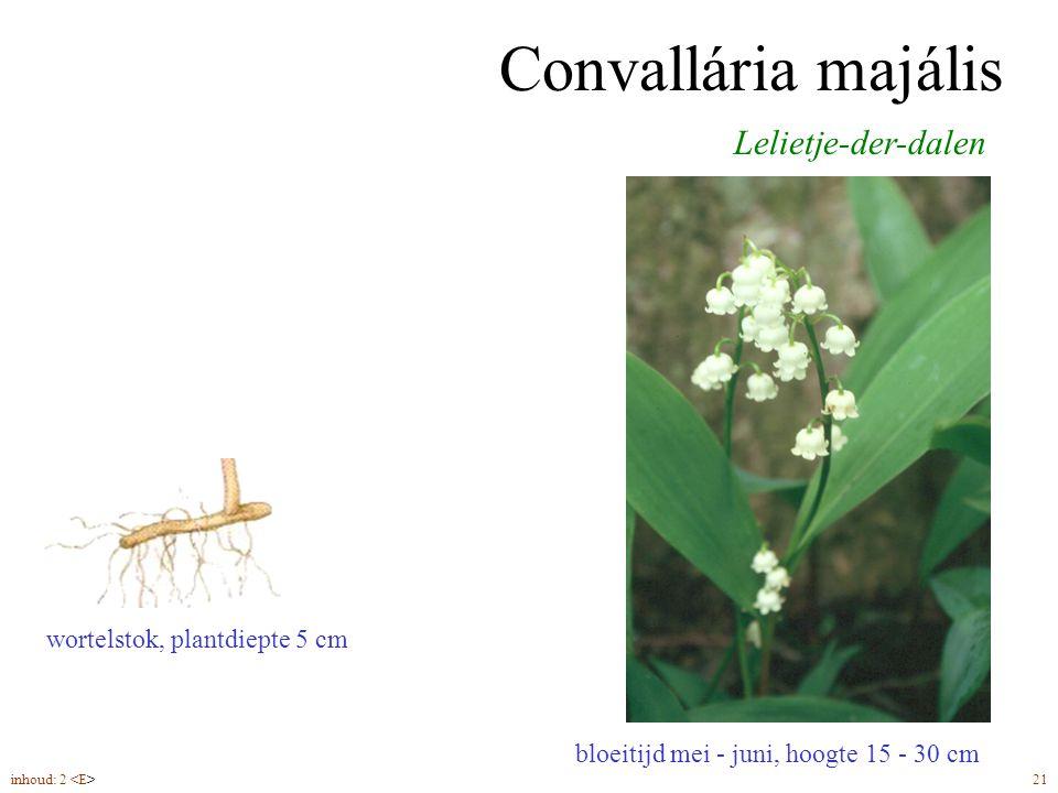 Convallária majális bloeitijd mei - juni, hoogte 15 - 30 cm Lelietje-der-dalen wortelstok, plantdiepte 5 cm inhoud: 2 21