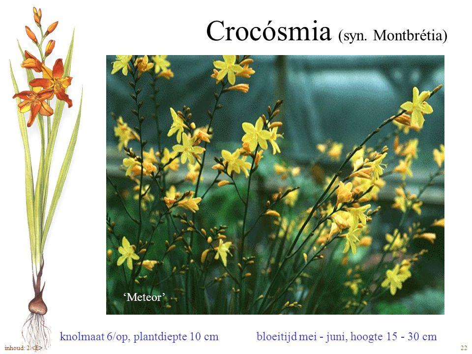 Crocósmia (syn. Montbrétia) bloeitijd mei - juni, hoogte 15 - 30 cm 'Meteor' knolmaat 6/op, plantdiepte 10 cm inhoud: 2 22