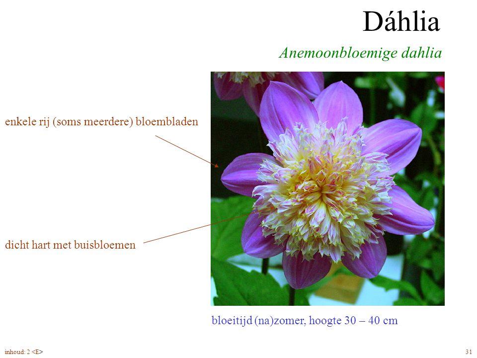 Dáhlia anemoonbloemig bloeitijd (na)zomer, hoogte 30 – 40 cm Anemoonbloemige dahlia Dáhlia enkele rij (soms meerdere) bloembladen dicht hart met buisbloemen inhoud: 2 31